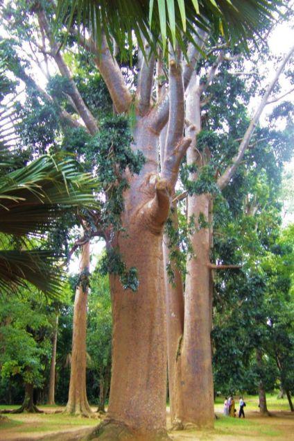 Botanische tuin (2)