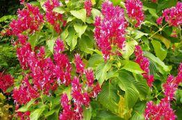 Botanische tuin (31)