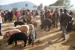 Dierenmarkt (17)