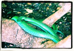 Dumazulu 09 (snake farm in hotel)