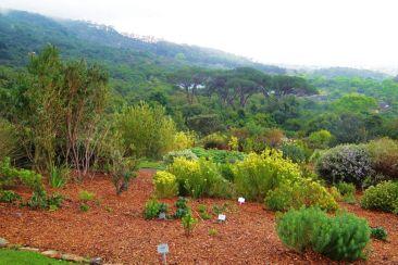 Kirstenbosch Garden (21)