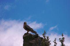 Parque Condor (4)