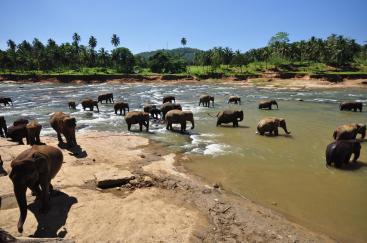 Pinnawala Elephant orphanage (19)
