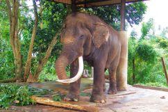 Pinnawala Elephant orphanage (6)