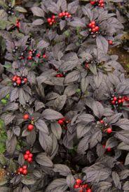 botanical-garden-32
