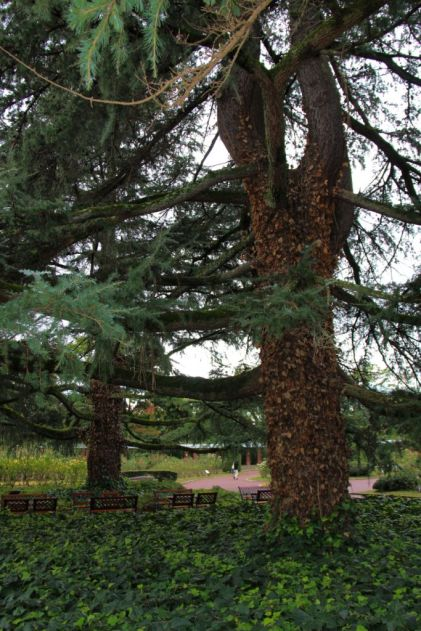 botanical-garden-39