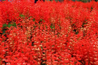 botanical-garden-51