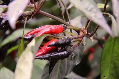 botanical-garden-64