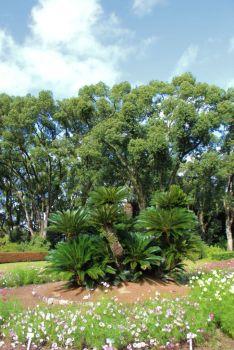 botanical-garden-8