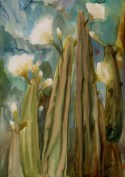 cactus-eudoxia