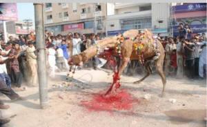 camel-halal