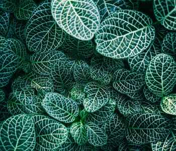 zen pattern, leaves, mindfulness