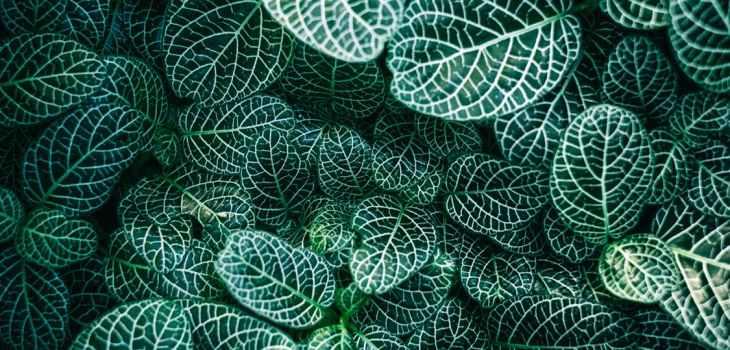 zen pattern, leaves, mindfulness