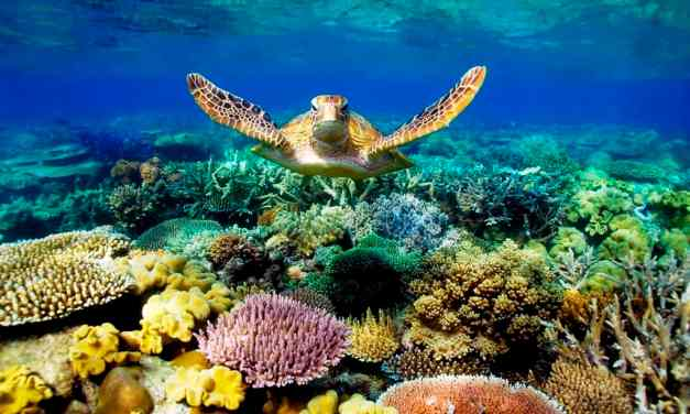 Only Gullible Fools Believe that the Great Barrier Reef is Dying