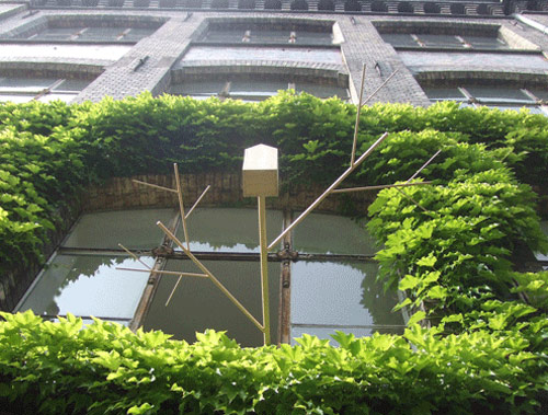 9809893 4c06f8e938 o Casa de passarinho para fora da janela