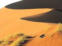 Пленительные туры в Намибию из Москвы