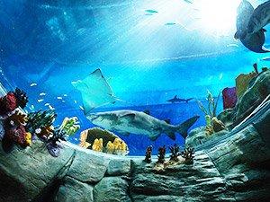 Океанический парк в Гонконге