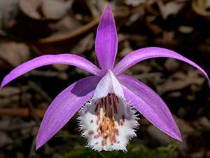 Вьетнамские орхидеи в подарок