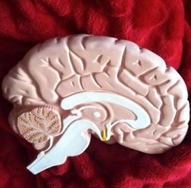 Uniwersalny dopaminowy mechanizm uzależnień