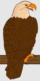 Adler_3