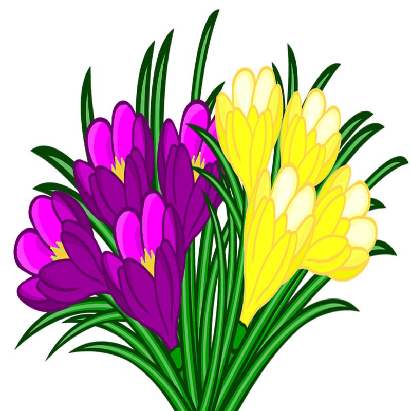 Blumen  Meine Internetseite