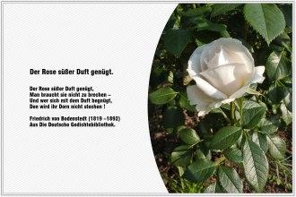Der Rose suesser Duft genuegt – Friedrich von Bodenstedt