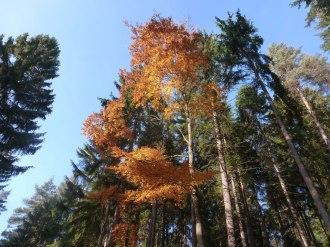Herbstwald 10