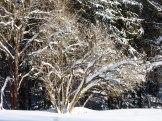 Klingenthal – Schneelandschaften 14