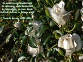 Die weiße Rose am längsten blüht – Friederike Kempner