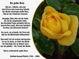 Die gelbe Rose – Gottlie _Konrad Pfeffel