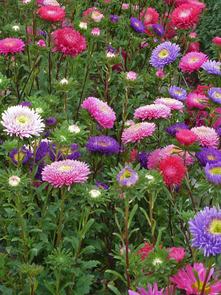 2014 August 26  Blumen  Gedichte  Maerchen