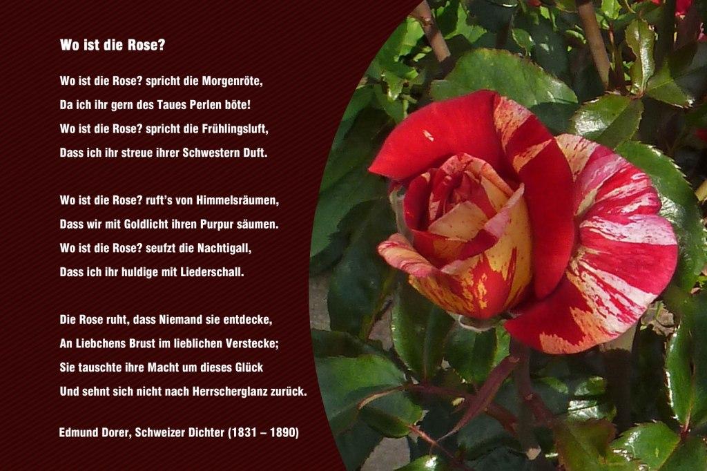 Wo ist die Rose  Edmund Dorer  Blumen  Gedichte  Maerchen