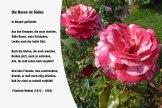 Die Rosen im Süden – Friedrich Hebbel