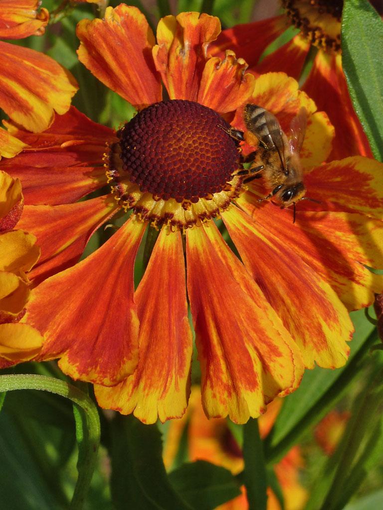 Sonnenbraut  Blumen  Gedichte  Maerchen