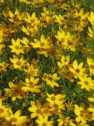 Maedchenaugen  Blumen  Gedichte  Maerchen