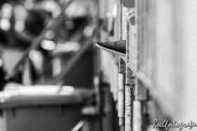 hockey nedchi 150605 - roelfotografie-58
