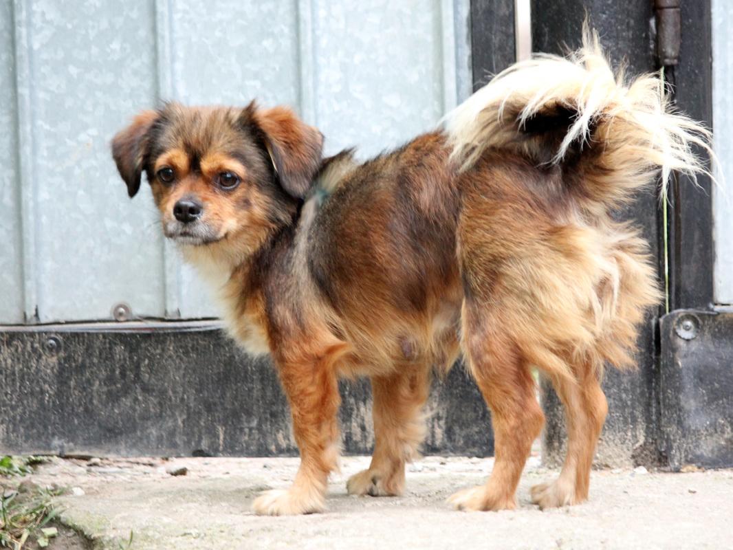 Kleurplaten Kerst Honden.Kerst Voor Honden Set Kerstkaarten Met Schattige Puppies