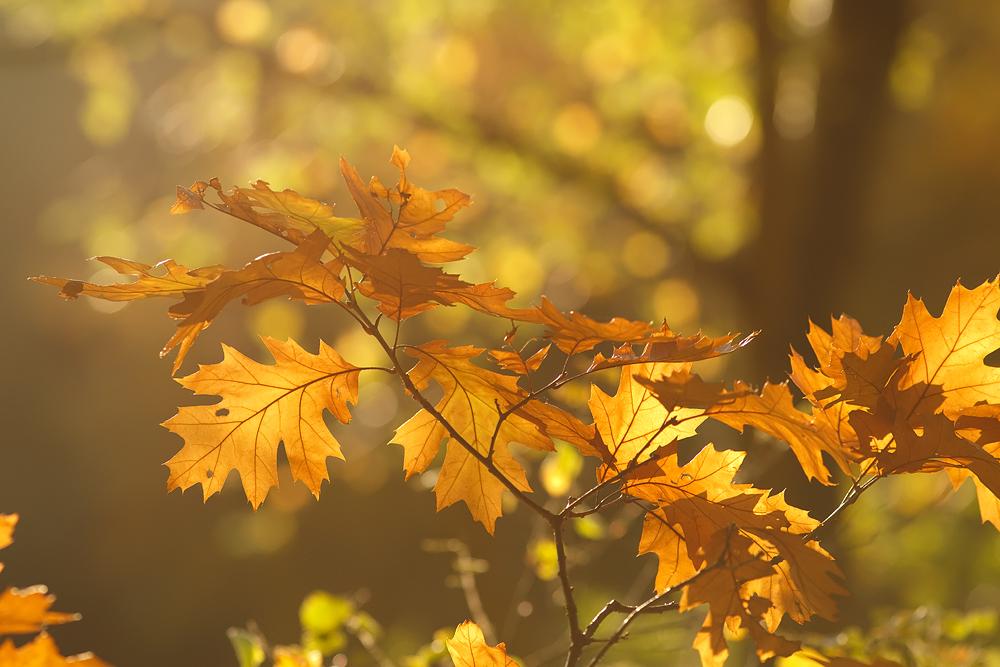 Fall Leaves Hd Wallpaper 93 Herfstspinselen Www Roeselien Nl