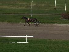 løbsk hest! - fanget af Mortensen