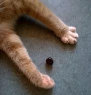 Sigge har igen scoret en oliven