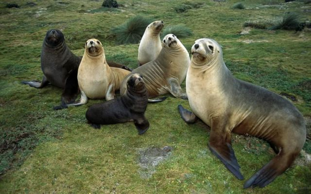 Cute Puppies Sleeping Wallpaper Seal Family Photo Funny Pictures Of Animals