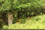 england2013-wistmanswood-3582