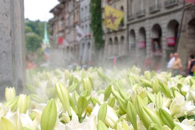 Blumen in Bern