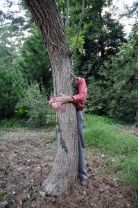 Chestnut treehugger#2