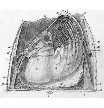 Darwin's barnacles