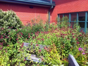 The Habitat at Stonehouse Elementary School