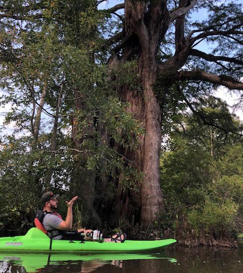 Powhatan Creek Bald Cypress