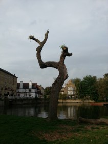 (Photo inspired by my dear friend JH, who makes trees the esteemed subject of many of her travel photos!)