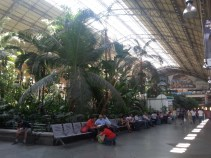 A lil rain forest time while you wait for the train. Nbd.