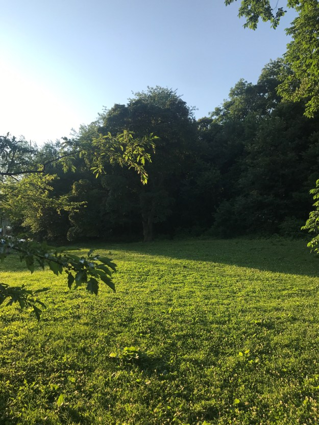 6 - Inwood Hill Park